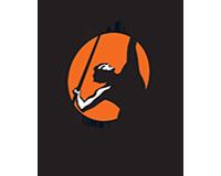 Portfolio Penguin